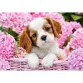 Puzzle 500 dílků - Štěňátko v růžových květinách 52233