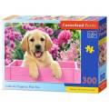 Puzzle 300 dílků - Labrador v růžovém boxu 30071