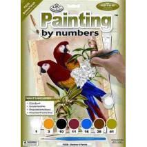 Malování podle čísel - Papoušci PJS38