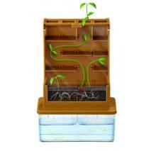 Rostlinné bludiště