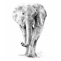 Malá sada tvoření - SKICOVÁNÍ Safari