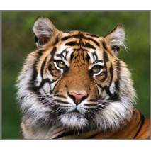 Ruční foto projektor - Nebezpečná zvířata
