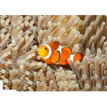 Ruční foto projektor - Mořská stvoření
