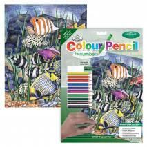 Malování podle čísel pastelkami A4 - Mořské ryby
