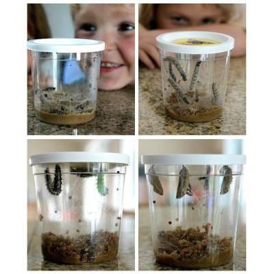 InsectLore Motýlí zahrádka (3-5 housenek) - Butterfly Garden