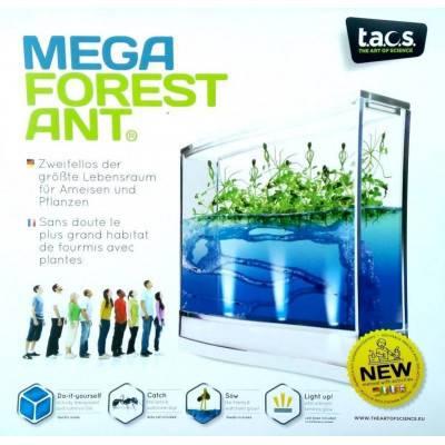 T.A.O.S. MEGA Forest Ant LED Antquarium