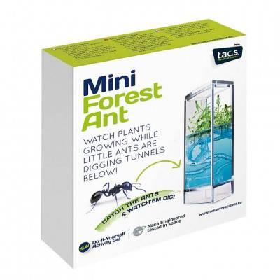 T.A.O.S. Forest Ant Mini Antquarium